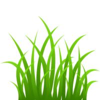 Газон семена травосмеси