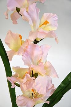 Гладиолус одиночный розовый 106см