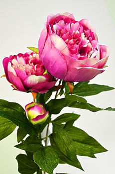 Пион ветвь 3 цветка малиновый 72см