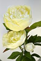 Пион ветвь 3 цветка кремовый 72см