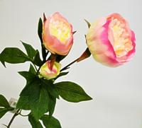 Пион ветвь 3 цветка нежно розовый 72см