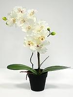 Орхидея фаленопсис в кашпо белая 51см