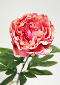 Пион одиночный розовый 75см