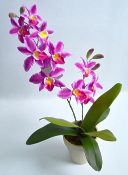 Орхидея цимбидиум в кашпо фиолетовая