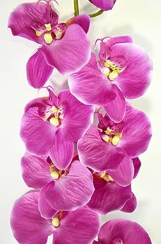 Орхидея Фаленопсис одиночная розовая 124см
