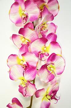 Орхидея Фаленопсис персиковая одиночная 124см
