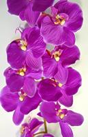 Орхидея Фаленопсис одиночная фиолетовая 124см