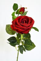 Роза британия 2 цветка бордовая
