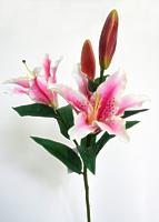 Лилия ветвь 4 цветка белая с розовым