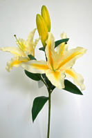 Лилия ветвь 4 цветка белая с желтым