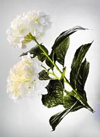 Гортензия белая 95см
